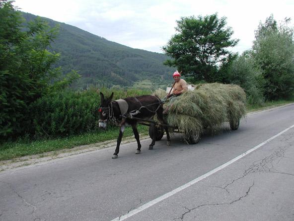 עגלון בבולגריה. ברבים מהכפרים ההרריים נדמה שהזמן עצר מלכת