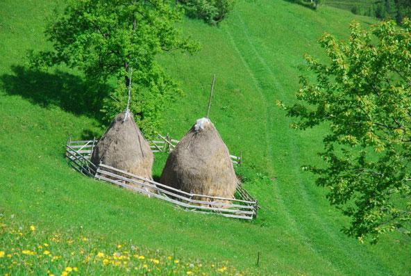 <br />             הירוק היום ירוק יותר... מנופי הקרפטים ברומניה. באביב פריחה צובעת את כרי העשב