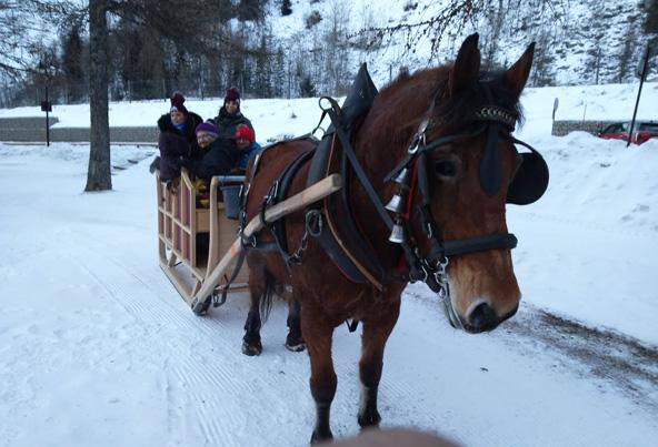 טיול בכרכרה עם סוס בשמורת ונואז היפהפייה | צילום: לוראן רומאני