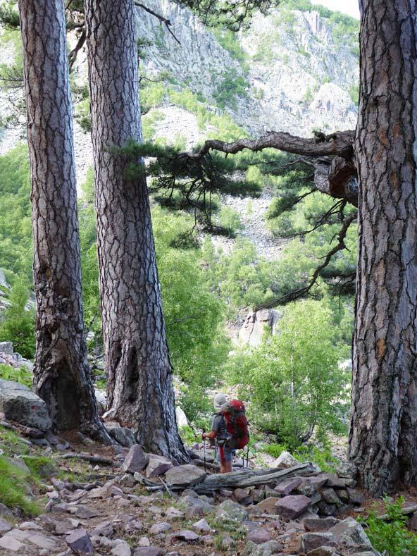 בלב היער. הדמות הקטנה בין העצים היא לא כיפה אדומה... | צילום: משה ינקו