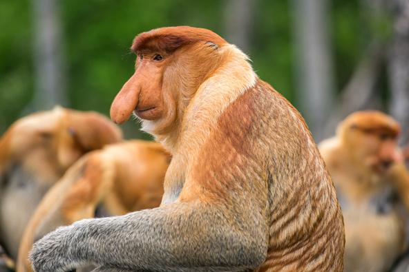 בעלי החיים הכי משונים בעולם