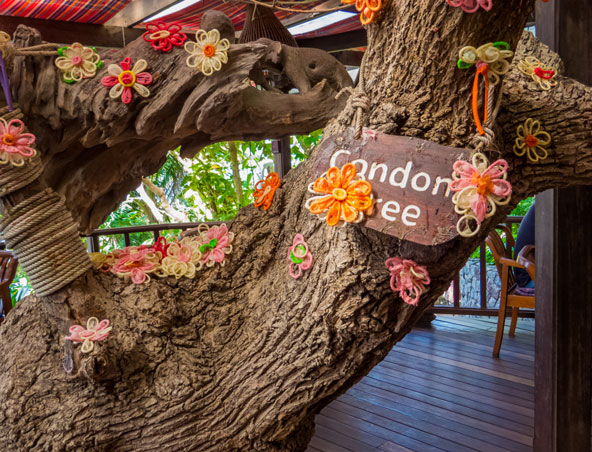 עץ מעוטר בפרחים עשויים מקונדומים בסניף של כרובים וקונדומים בפאטייה