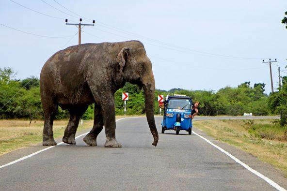 פיל חוצה, אזור ארוגם ביי