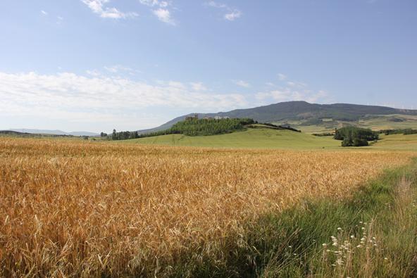 מישורי הביניים של הפירינאים, בקטע שבין פונטה לה ריינה ואסטלה. חיטה שטרם נקצרה, שמש קופחת, הליכה מדיטטיבית משהו
