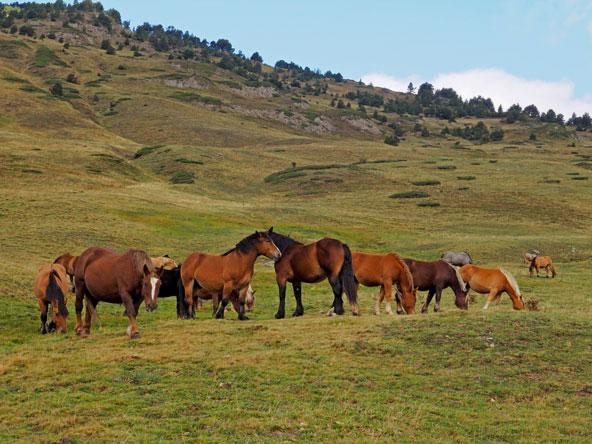 סוסים רועים באחו, מהמראות הפסטורליים של קטלוניה