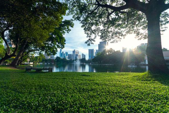 פארק לומפיני, הריאה הירוקה של בנגקוק