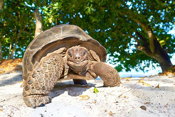 חיוך צבי. באיי סיישל חיים צבי יבשה ענקיים ומינים רבים של ציפורים, חלקם אנדמיים לסיישל
