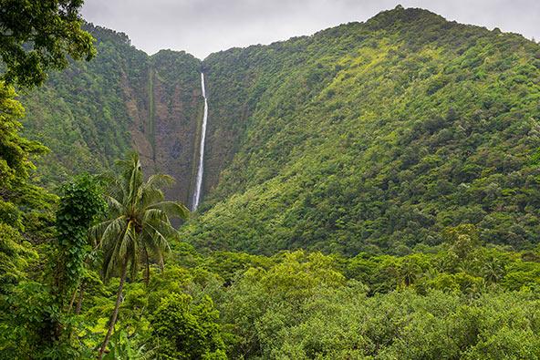 עמק וואיפיו. צמחייה טרופית ירוקה ומפלים יפהפיים