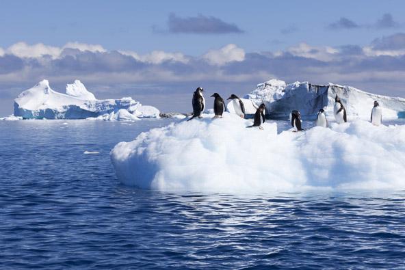 פינגווינים על קרחון באנטארקטיקה. ינואר הוא חודש קיצי ביבשת הקפואה