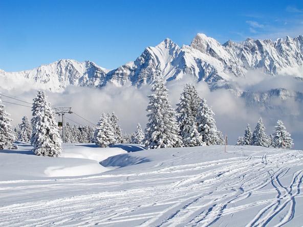 האלפים השווייצריים בחורף הם גן עדן לגולשים, ולא רק להם
