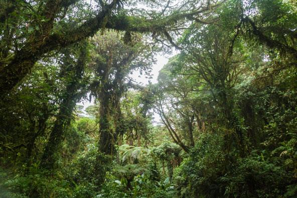יער עננים בקוסטה ריקה. הקרבה לטבע מקלה על הקרבה לאחרים ולעצמך