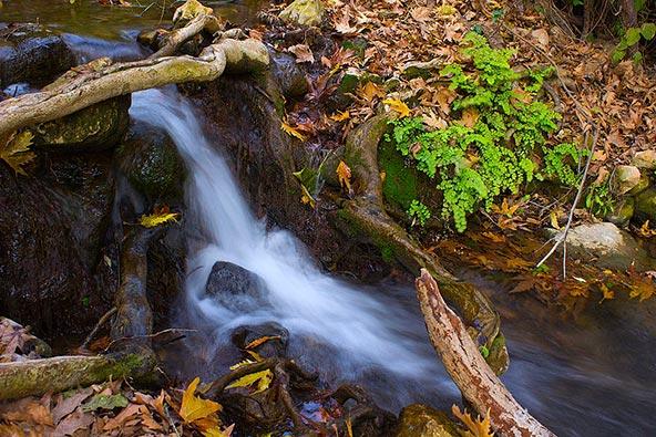 נחל עמוד. שמורת טבע מקסימה במשך כל השנה | צילום: מגרי יעל, מתוך אתר פיקיויקי
