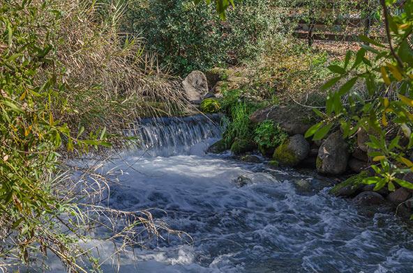שמורת תל דן, הכי קרוב לגן עדן