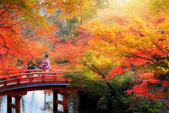 קיוטו בסתיו. היש יפה מזה?