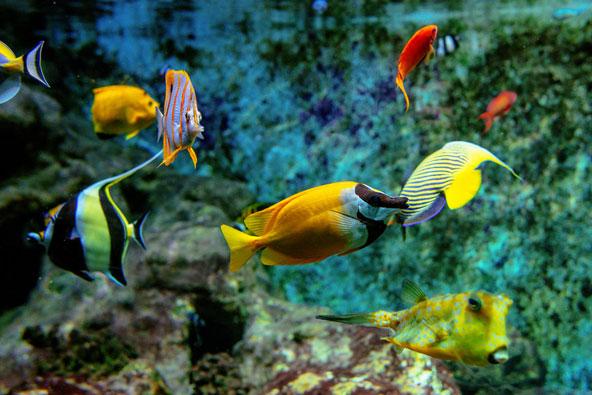 דגים טרופיים ססגוניים באקרווריום של גן החיות ארטיס