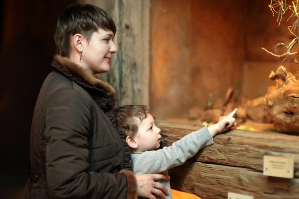 תצוגה בביתן החרקים בגן החיות של פראג