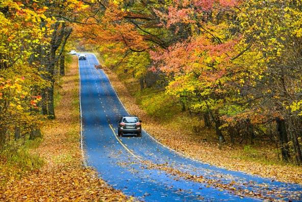 כביש מוקף בצבעי שלכת בפארק הלאומי שננדואה