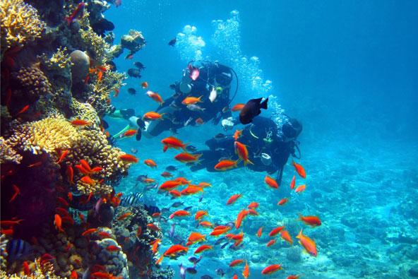 אתרי צלילה באילת