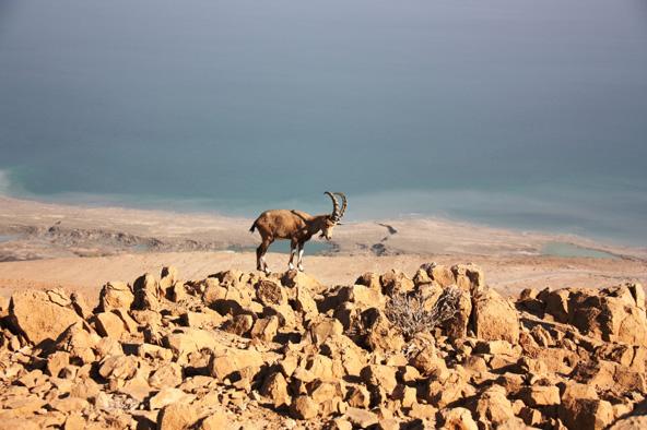 מפגשים עם בעלי חיים בטבע הישראלי