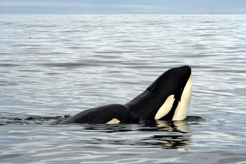 חצי האי ולדז, ארגנטינה – לפגוש פינגווינים ולווייתנים