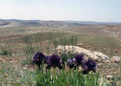 עלייה משמעותית באיומים על שטחים פתוחים בישראל