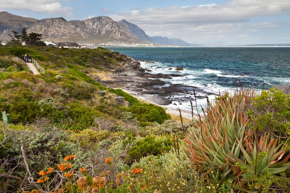 דרום אפריקה מחוץ למסלול המוכר