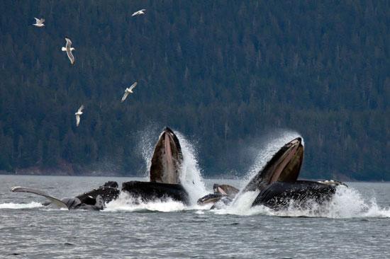 מפגש עם לווייתנים – בפה פעור