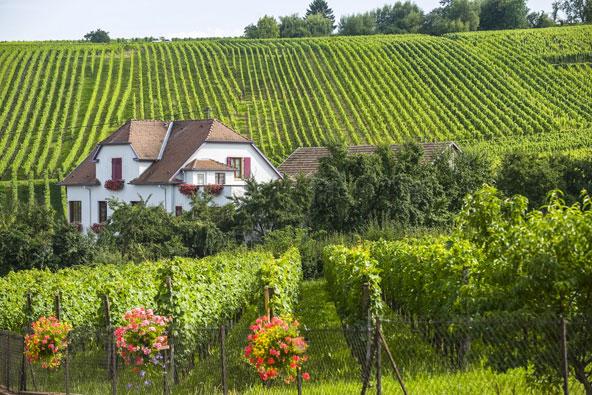 דרכי היין הנפלאות של צרפת