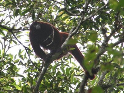 פרו – שומרים על קוף הצמר – חלק ב'