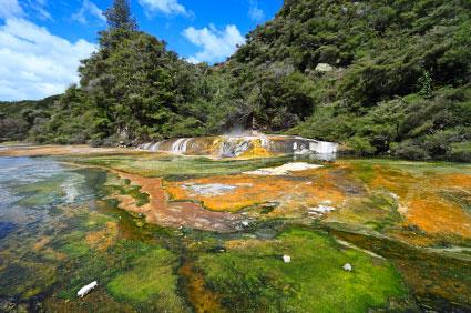 ניו זילנד – ירוק בעיניים