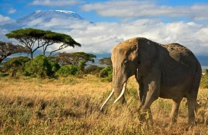 מסע שטח נשי לטנזניה וזנזיבר