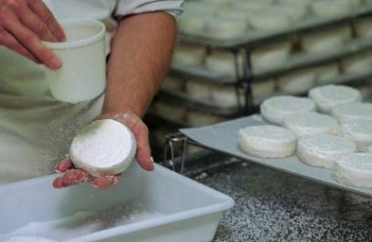 מחלבות בוטיק – גבינות מתוצרת מקומית