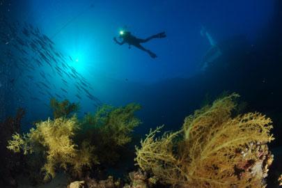 הקמת מלון בחוף אלמוג תסכן את שונית האלמוגים