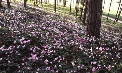אל הפריחה בגבעת הרקפות