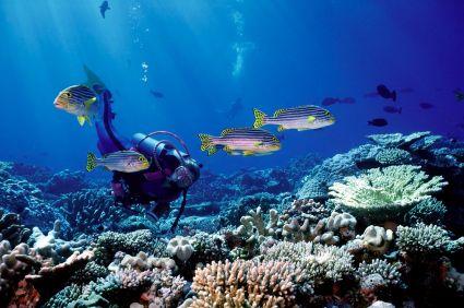 צלילה באיים המלדיביים