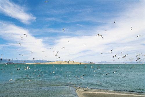 הצלת אגם מונו בקליפורניה, כמודל