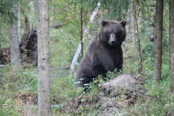 אסטוניה – טיול חיות וטבע