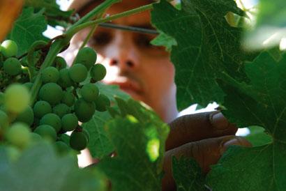 המילים הנכונות – מילון מונחי יין