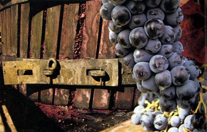 סוד התסיסה – תרבות היין העולמית