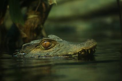 תנינים בוונצואלה – נסיכי המים הם לא מזוודות