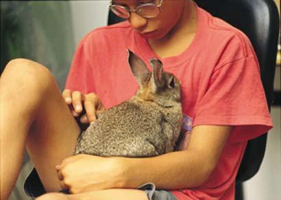 תרפיה עם בעלי חיים: עם הארנבת קל יותר לשבת