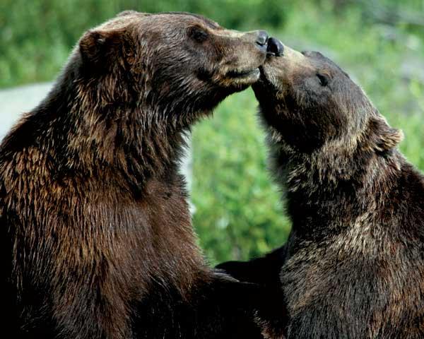 אהבה חייתית – טקסי חיזור בטבע