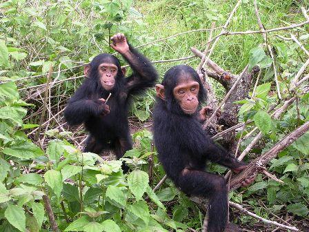 ישראלי זכה בפרס בינלאומי על הצלת קופי אדם