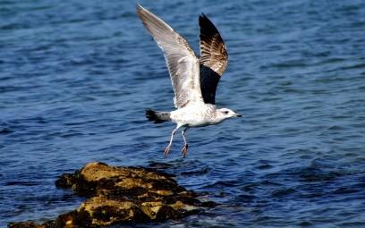 ג'סר א-זרקא: דייגים, שחפים ופחים