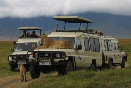 טנזניה – טיול ג'יפים בשמורות