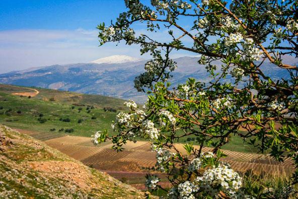 טרק ישראלי – טיול הליכה בגליל