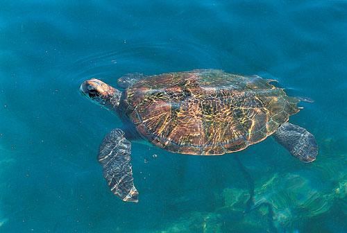 צבי ים: המסע המופלא