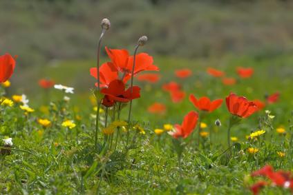 רמות מנשה: יערות, נחלים ופריחה אביבית