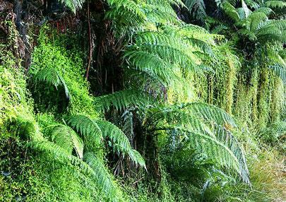 מחקר חדש: צמחים מתקשרים עם צמחים בסביבתם