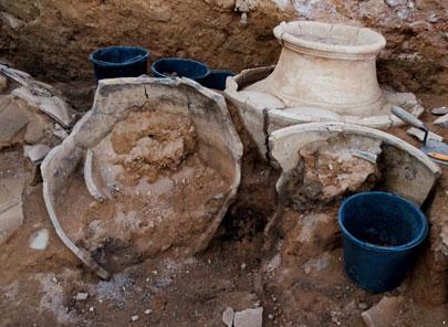 חיטה בת אלפי שנים התגלתה בתל חצור